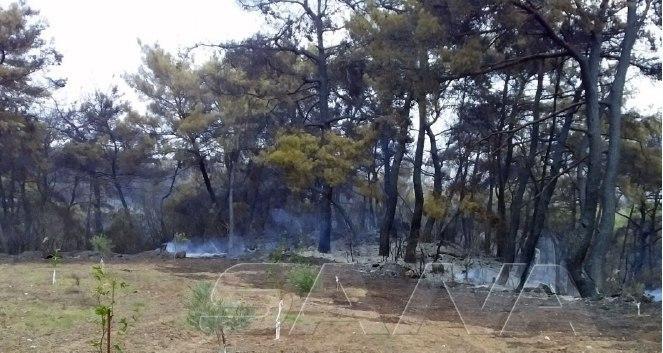 وزير الزراعة: دراسة كل أشكال المساعدات للمتضررين من الحرائق