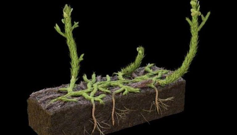 كشف أسرار نمو النبات قبل 400 مليون عام